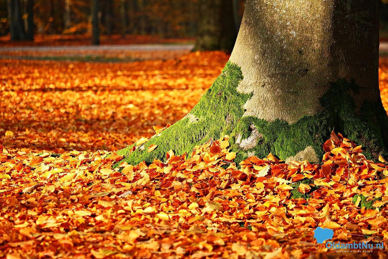 Photo of Herfst mogelijk natter dan normaal