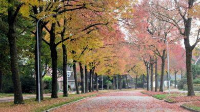 Photo of Maandverwachting: oktober wordt mild en nat!