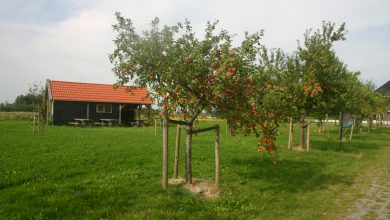 Photo of Fruitpersdag – kom je eigen fruit persen of pluk fruit ter plekke