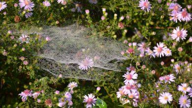 Photo of Het tuinpad op – In Nachbars Garten