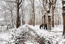 Photo of In Beeld: Sneeuwpret in Oldambt