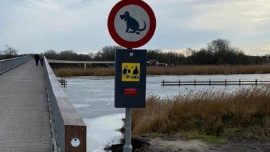 Photo of Gemeente onderneemt direct actie na klachten over hondenpoep op Pieter Smitbrug